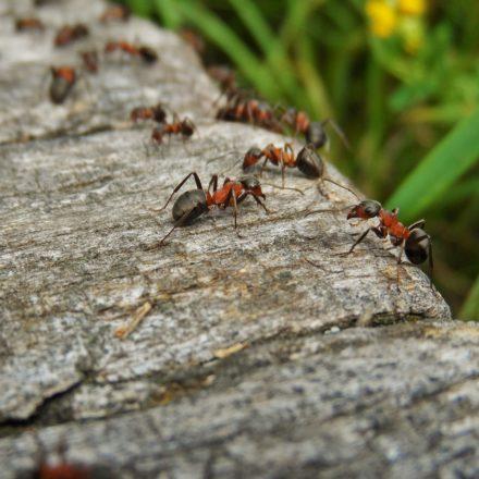 10 rimedi naturali contro le formiche che invadono casa