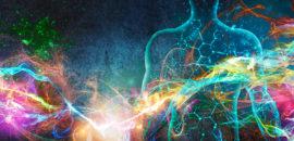 Omeostasi: quanto influisce sull'equilibrio energetico