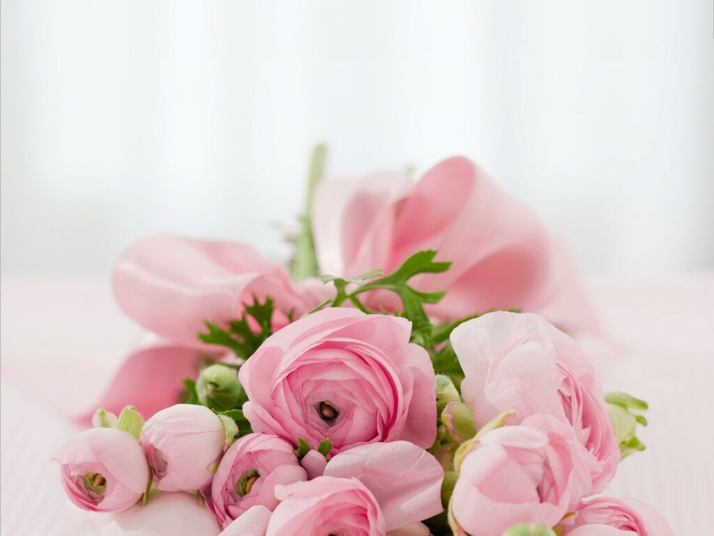 pink roses to realize roses water, one of the natural remedies against dark circles and eye bags
